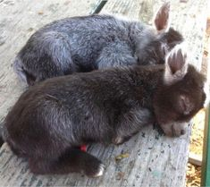 35 Adorable and Cute Sleeping Animals Cute Animals, Love Little Animals. Best of swety animal pictures Donkey Pics, Baby Donkey, Cute Donkey, Cute Little Animals, Cute Funny Animals, Adorable Baby Animals, Funny Dogs, Tierischer Humor, Sleeping Animals