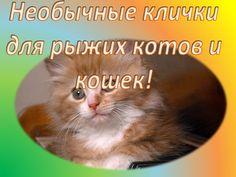 Необычные клички для рыжих котов и кошек!Смешные животные # 19