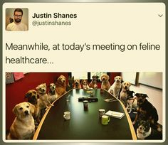 Meanwhile, at today's meeting on feline healthcare...