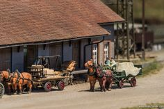 Hochschwarzwald 24 - Horsepower!!