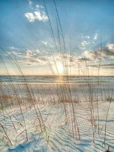 Among the Grass Robert Jones Photography Coastal Ocean Beach Sunrise Sunset Print Poster Quality Art Print Direct From Publisher Beach Photography, Landscape Photography, Nature Photography, Beach Pink, Ocean Beach, Beach Grass, Beach Sunrise, Orange Beach, Poster Art