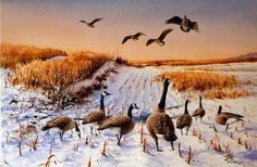 Canada Geese - Waterfowl Paintings