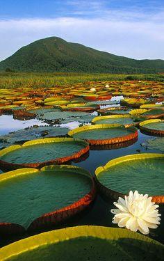 Pantanal / Mato Grosso do Sul / Brazil