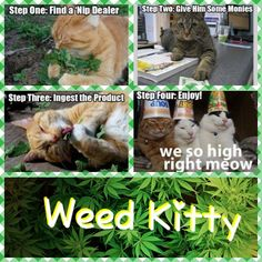 Weed kitty  Ahere!
