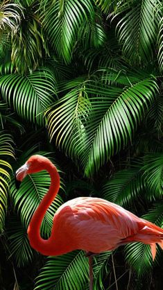 Tropical flamingo vibes for your phones wallpaper - Live Wallpapers Tier Wallpaper, Flamingo Wallpaper, Tropical Wallpaper, Summer Wallpaper, Trendy Wallpaper, Animal Wallpaper, Colorful Wallpaper, Black Wallpaper, Aesthetic Iphone Wallpaper