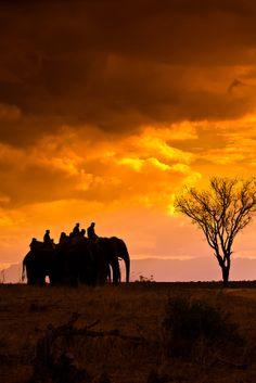 Camp Jabulani, Kapama Private Game Reserve, South Africa. I rode the elephant named Jabulani, which means 'happiness'.