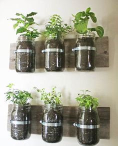 herbs garden design to reuse and recycle empty glass jars