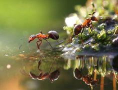 Sua casa sem formigas - Ideal Receitas