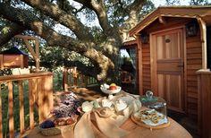 amazing-tree-houses