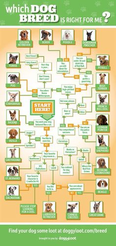 Which dog breed is right for you? (funny!)