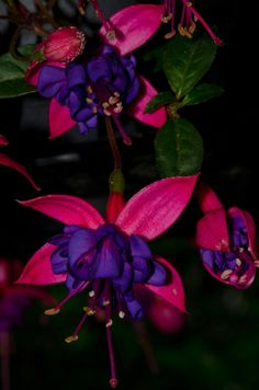 Fuchsia, by Andy  500px