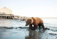 Depuis son plus jeune âge, le photographe américain Corey Arnolda été fasciné par la nature sauvage et la frontière ténue entrehumain et animal. L'ar