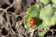 Lovely ladybird!