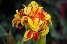 Orchid by Subash BGK, via Flickr