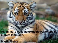 Here's is ‪#‎Quoteoftheweek‬! An animal's eyes have the power to speak a great language. Martin Buber