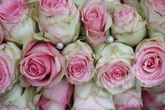 Pearls and pink/white roses in a bridal bouquet