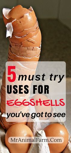 There are so many uses for eggshells instead of just throwing them away! Here are 5 of the top uses for eggshells you'll find anywhere.