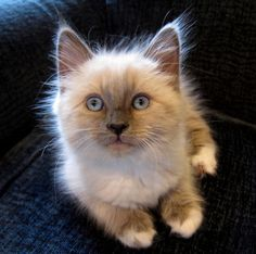 Time for an extremely cute kitten…..