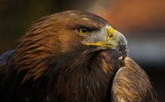 Aguila Real Mexicana
