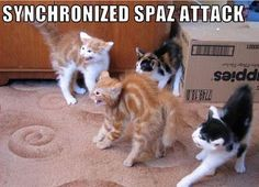 Silly Cat Pictures: Funny Cats with captions