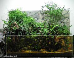 Horácovo akvárium: článek Pro inspiraci - nejkrásnější paludária 2