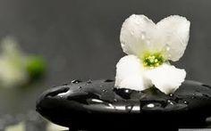Resultado de imagem para zen