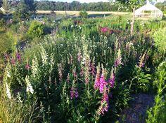 Honeybee Flower Farm