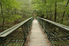 Hiking Company Mill Trail, Umstead State Park