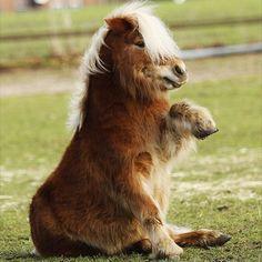 shaggy Pony....who must think he's a dog. ;o)