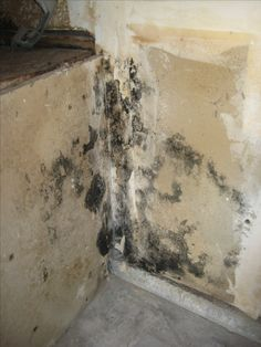Black mold behind the bathroom wall Just because you dont see