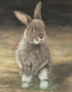 Brown Bunny ACEO Print by SavageArtworks on Etsy, $5.00