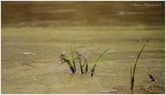 "Photo ""Dragonfly"" by aloisevandermerwe Dandelion, Cakes, Flowers, Plants, Photos, Dandelions, Food Cakes, Florals, Pastries"