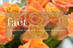 Know your flower meanings to ensure the right rose for the occasion. FTD will help you avoid floral faux pas with this color guide. Rose Color Meanings, Flower Meanings, Flower Words, Flower Quotes, Orange Roses, Red Roses, Rose Meaning, Good Happy Quotes, Meditation Stones