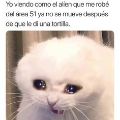 Cat Memes are damn funny. So, We thought to collect the best Cat Memes of the Internet and Funny Cat Memes, Bts Memes, Hilarious, Sad Cat Meme, Funniest Memes, Funny Shit, Animal Jokes, Funny Animals, Cat Crying