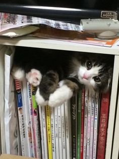 cat hiding bookshelf