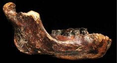 Image is a fossilized jawbone, dubbed Penghu 1, found submerged in seafloor near Taiwan. Dated between 10,000 and 190,000 years ago. It is the first ancient human fossil found in Taiwan and may indicate the presence of an unknown archaic species of humans who lived in Asia during the Pleistocene era, possibly hundreds of thousands of years before modern humans arrived.