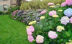 Ideas para que el jardín se vea más grande