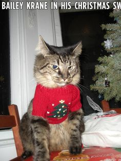 Christmas cat Bailey doesn't look too happy with his sweater!  funholidaycats.com