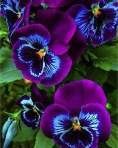 Публикация refika tuna1963 в Instagram • 8 Май 2019 в 2:44  UTC Необычные Цветы, Красивые Розы, Фиолетовые Цветы, Красивые Сады, Голубые Орхидеи, Флористика, Окрашенные Цветы, Красивые Цветы, Сиреневые Цветы