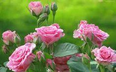 Resultado de imagen de las mas bellas flores del mundo