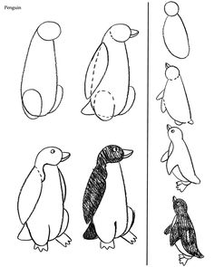 Willkommen bei Dover Publications - Step by Step - Birds Bird Drawings, Cartoon Drawings, Cute Drawings, Animal Drawings, Drawing Lessons, Art Lessons, Tier Doodles, Penguin Drawing, Drawing School