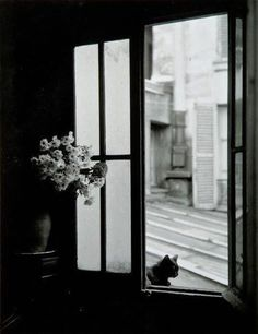 by Willy Ronis Le chat derrière la vitre, Gordes, 1957 Willy Ronis, Photo Black, Black White Photos, Black And White Photography, 17 Black, Chat Paris, B&w Tumblr, Street Photography, Art Photography