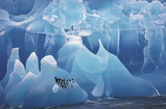 wildlife-A study in blue: Blue ice and penguins, by a woman (at last) photographer, Cherry Alexander. She specializes in arctic photography, and indigenous people of the North. She works mainly in Siberia, Greenland, Alaska, Canada, Arctic Scandinavia and Antarctica.