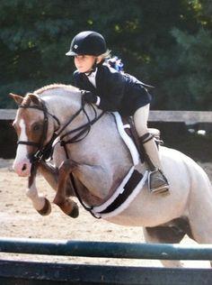 Ginger Snap - Welsh Pony - Hunter
