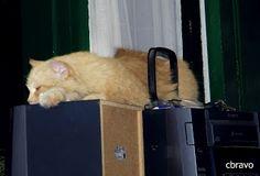 La foto del día: Música para dormir
