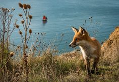 Red Fox by Jeff Morgan on 500px                                                                                                                                                                                 More
