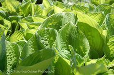 Florals & Botanicals - LADYBUG COTTAGE PHOTOGRAPHY #61