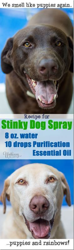 Recipe for Stinky Dog Spray - mix water with purification essential oil