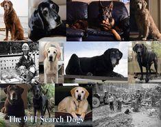 9/11 search dogs. Google Image Result for http://sphotos-b.xx.fbcdn.net/hphotos-ash3/551853_465360356828371_1904066161_n.jpg