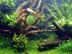 freshwater+water+aquarium+hobby   Fresh Water Aquariums http://freshaquarium.about.com/od/plants/ig ...